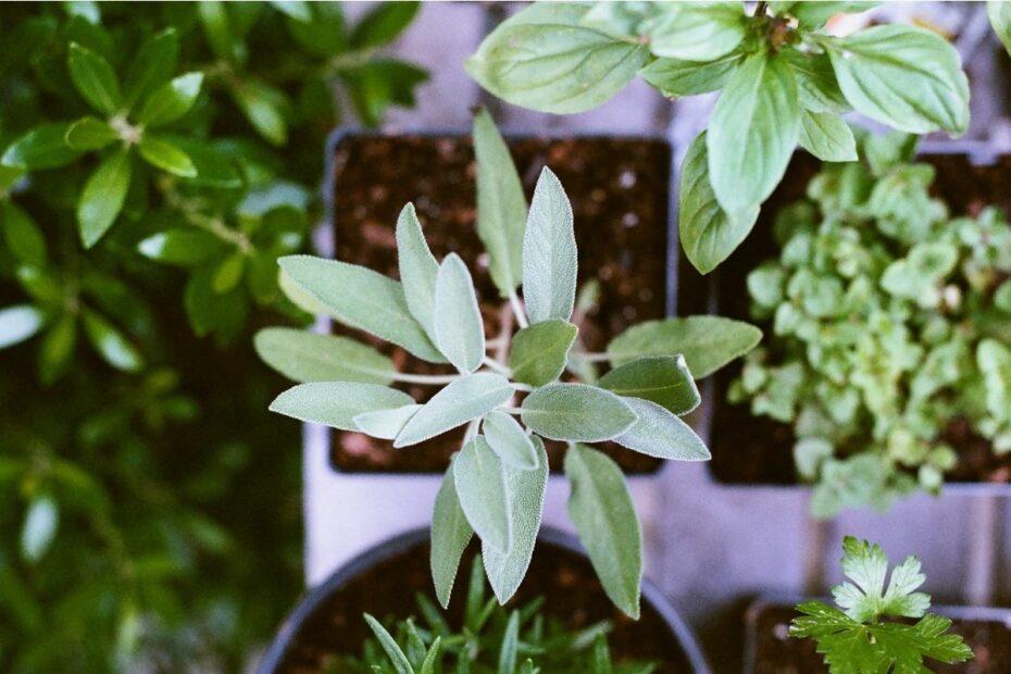 lys til å hjelpe planter vokse